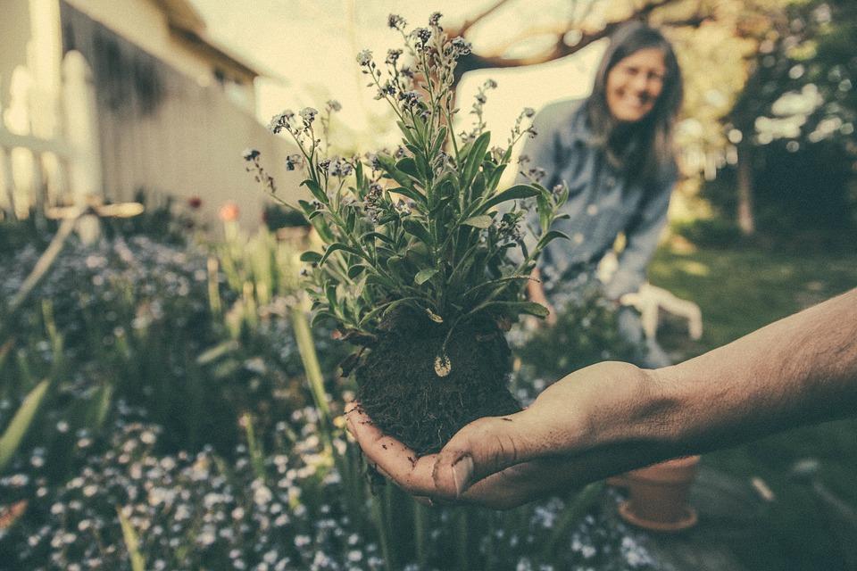 Planten zorgen voor een gezonde slaapkamer