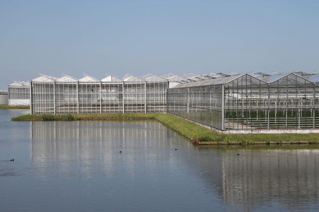 toekomst van glastuinbouw